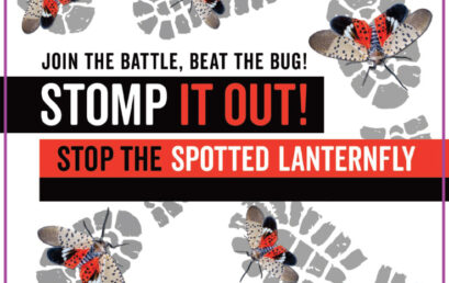 Spotted Lanternfly – What you should know
